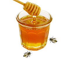 Indian Honey | Indian Honey Exporter | Honey Producers in India